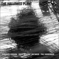 The Hallowed Plant