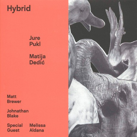 Hybrid w/ Marius Dedic